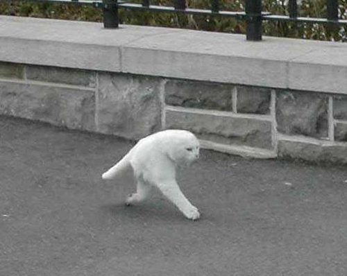 google-street-view-cat2