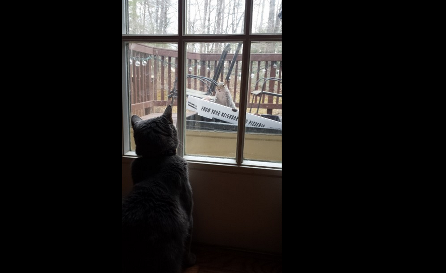 """'Squirrel Television' Wrote Kim O'Keefe: """"Our three-legged cat, Patrick Swayze, catches the latest episode of 'Squirrel Television' from our deck."""""""