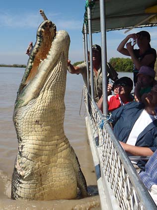 """""""Brutus"""", the one-armed saltwater crocodile, jumping for tourists on the Adelaide River, Northern Territory. Photo from Courier Mail, Brisbane."""