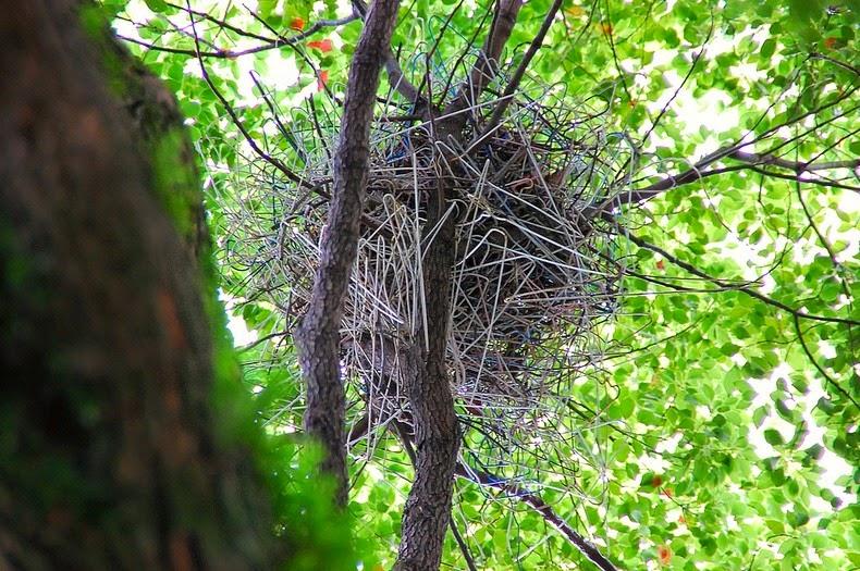 crow-nest-hanger-2[6]