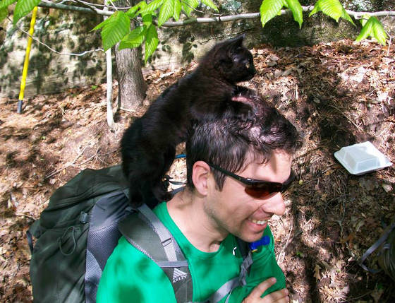 """n Red wanted some rest, he wasn't shy to ask for assistance. """"He rode on my shoulders or backpack, but insisted I hunch over."""" - See more at: http://lovemeow.com/2014/05/kitten-strays-into-climbers/#sthash.3AsHDXRo.dpuf Read more at http://lovemeow.com/2014/05/kitten-strays-into-climbers/#wdWT4zjOa5Zu85rM.99"""