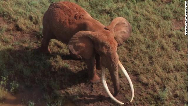 140615030033-satao-kenyan-elephant-story-top