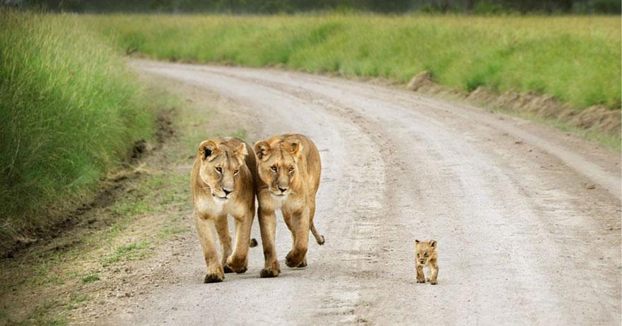 animal-parents-23