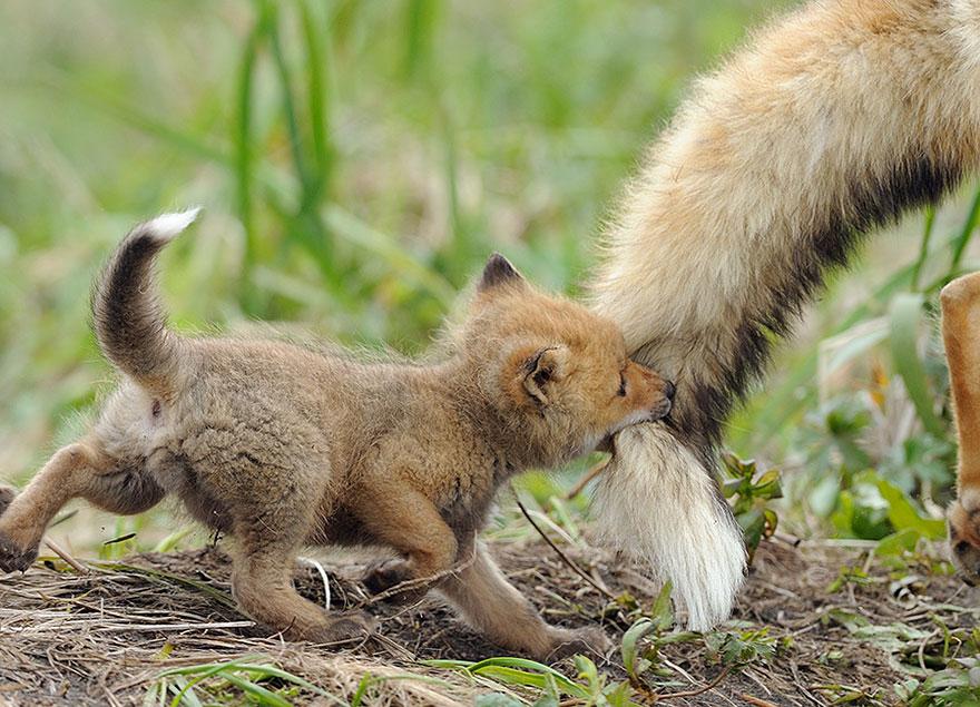 animal-parents-7