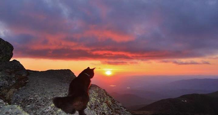 Cat sunrise