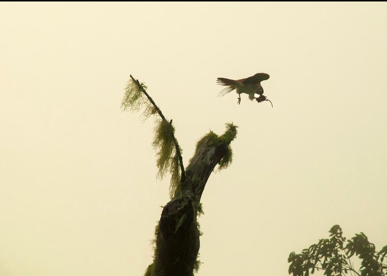 Screen shot 2014-06-12 at 6.06.55 AM