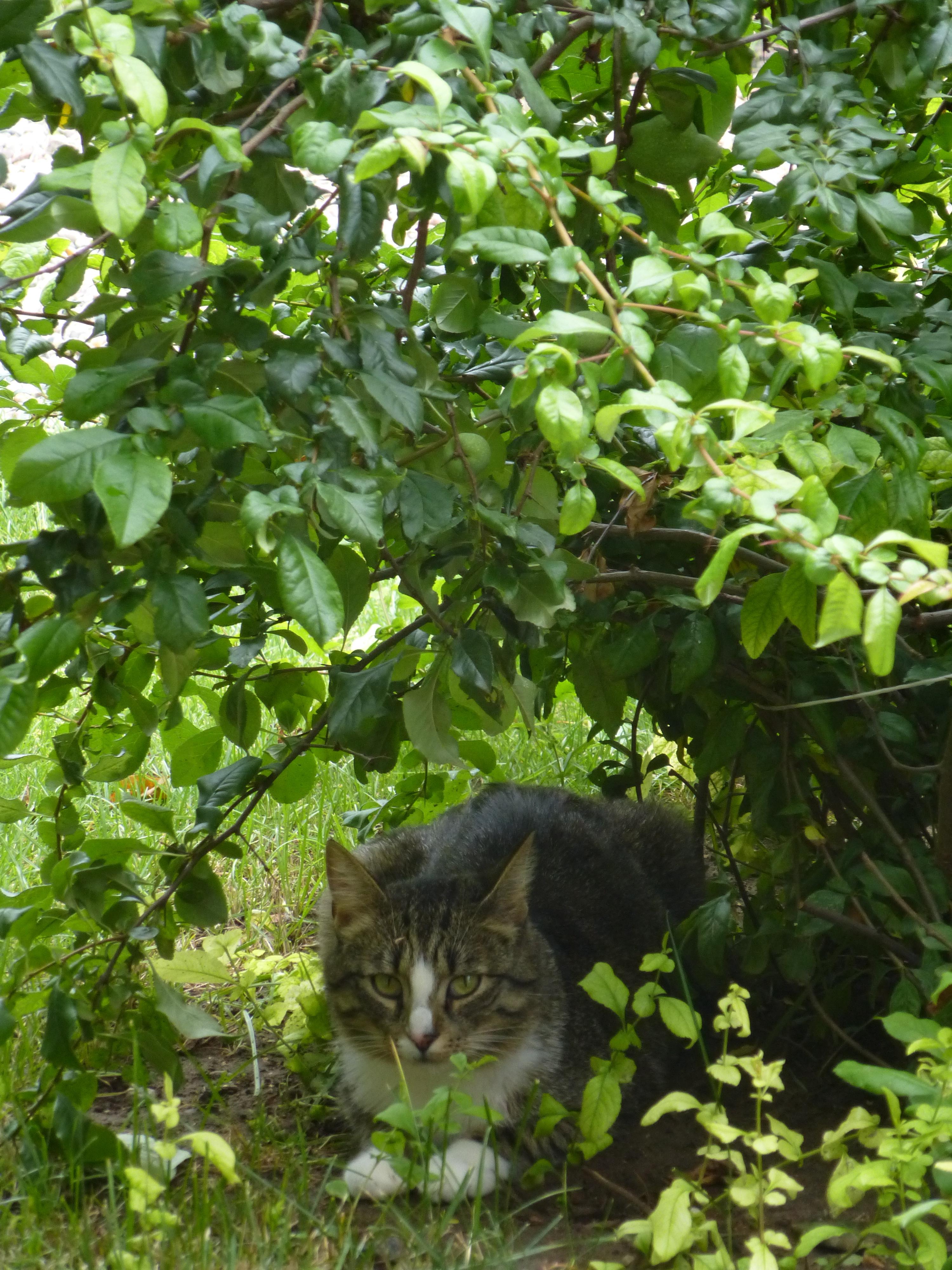 Find the cat 2