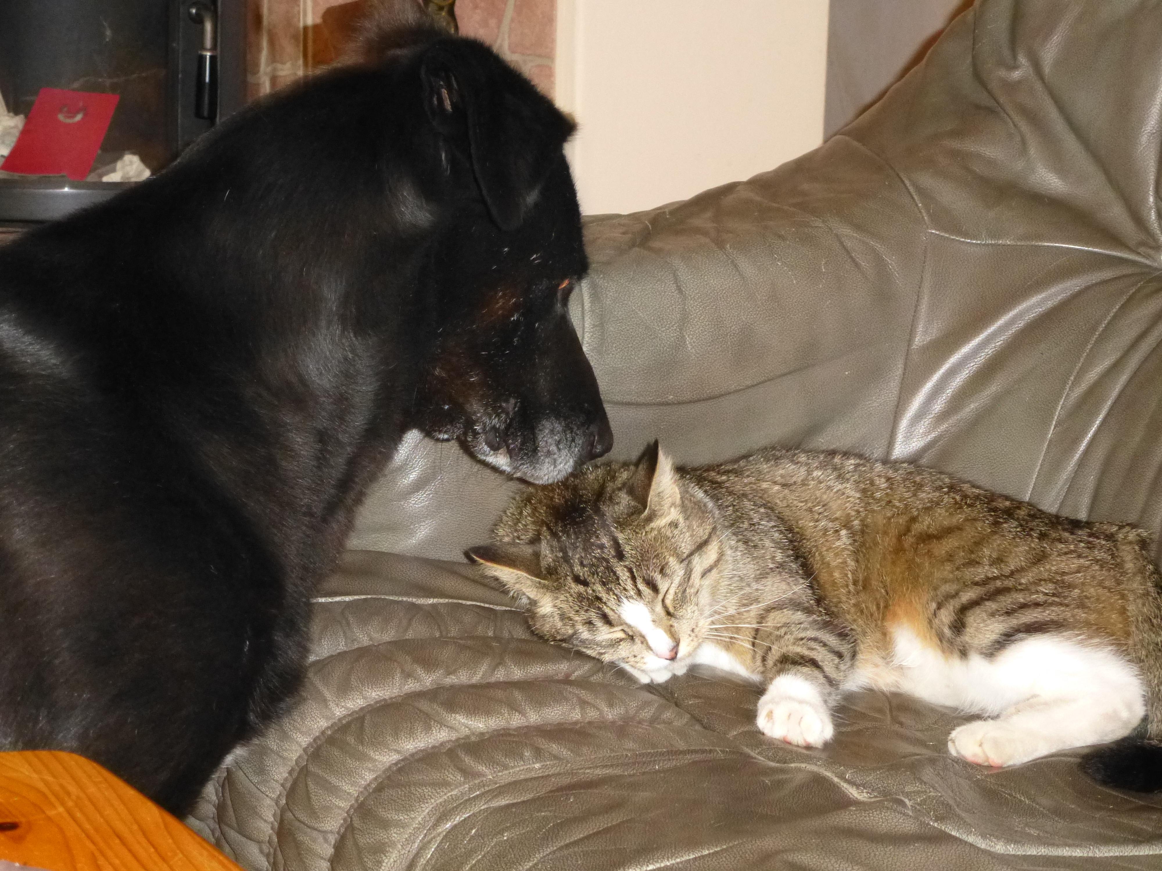 Hili and Cyrus lick