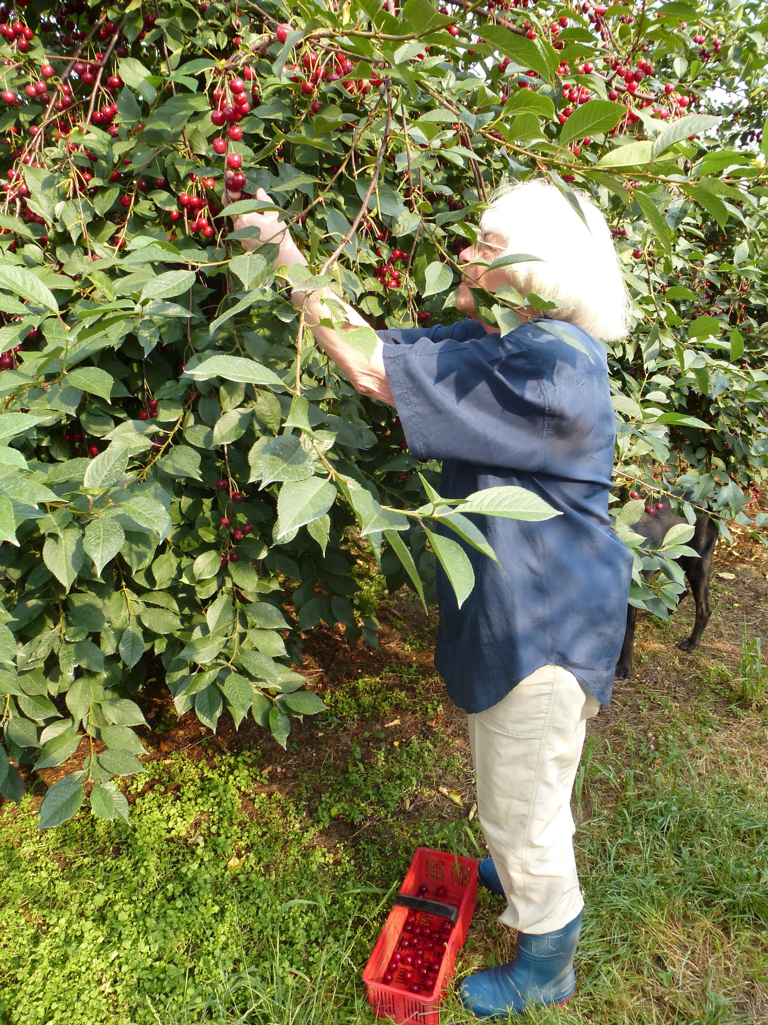 Malgorzata picking