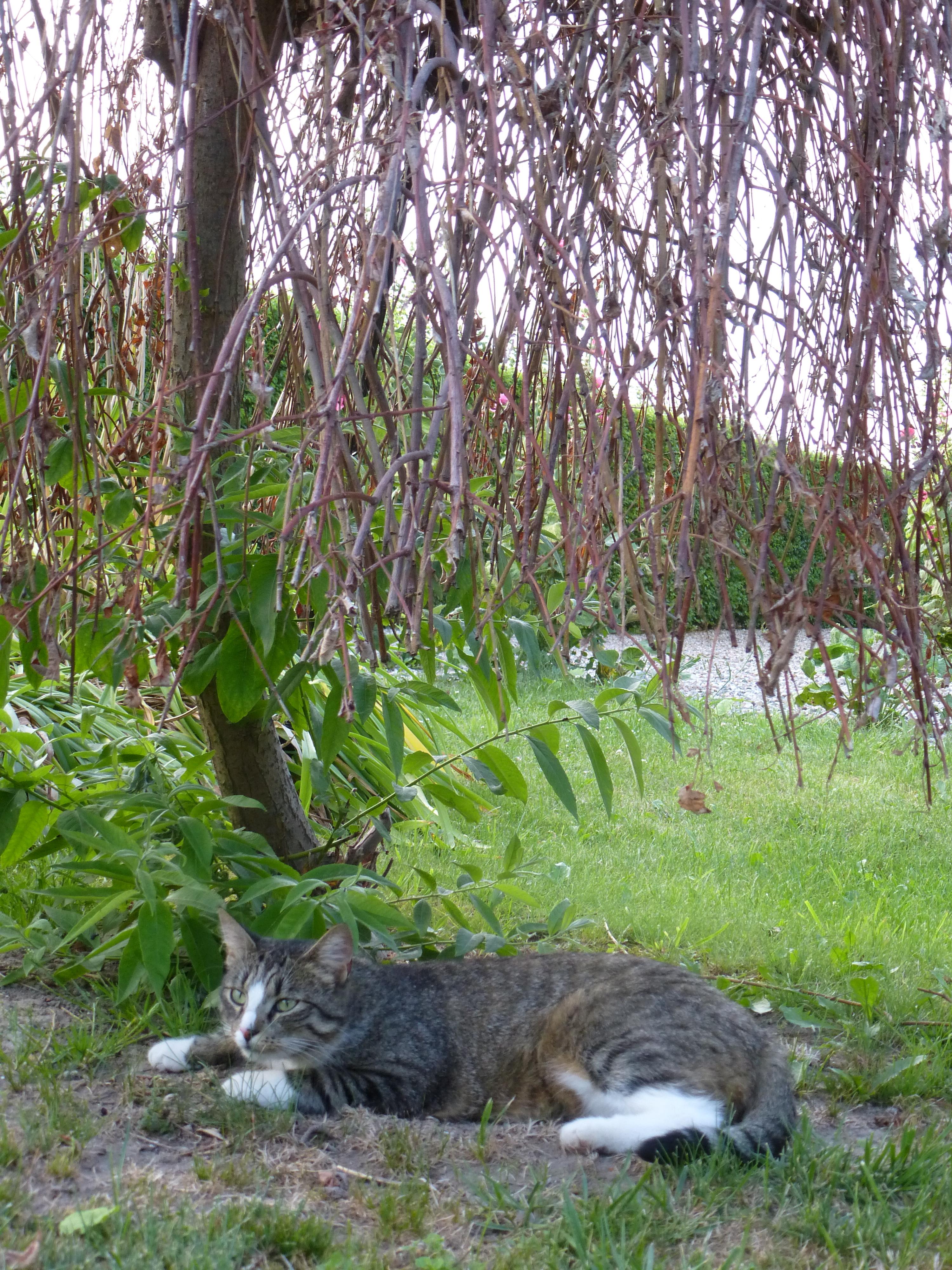 Hili under trees