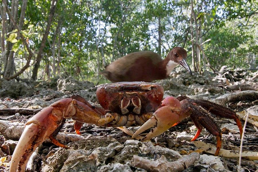 Rail&Crab4