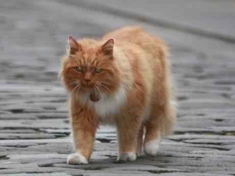 Hamish-the-cat