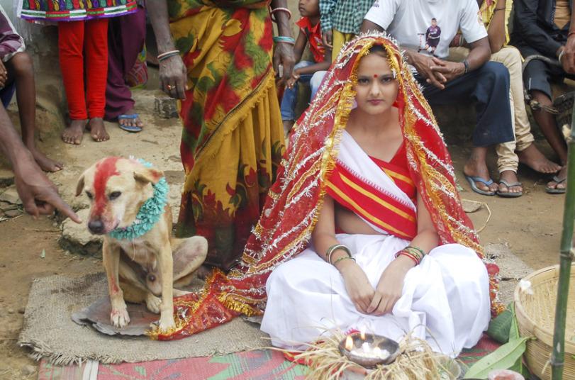 potd-wedding-dog_3026538k