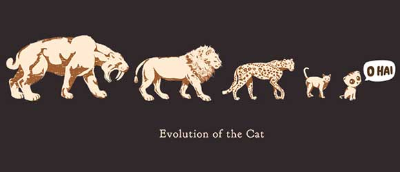The-evolution-of-the-domestic-cat