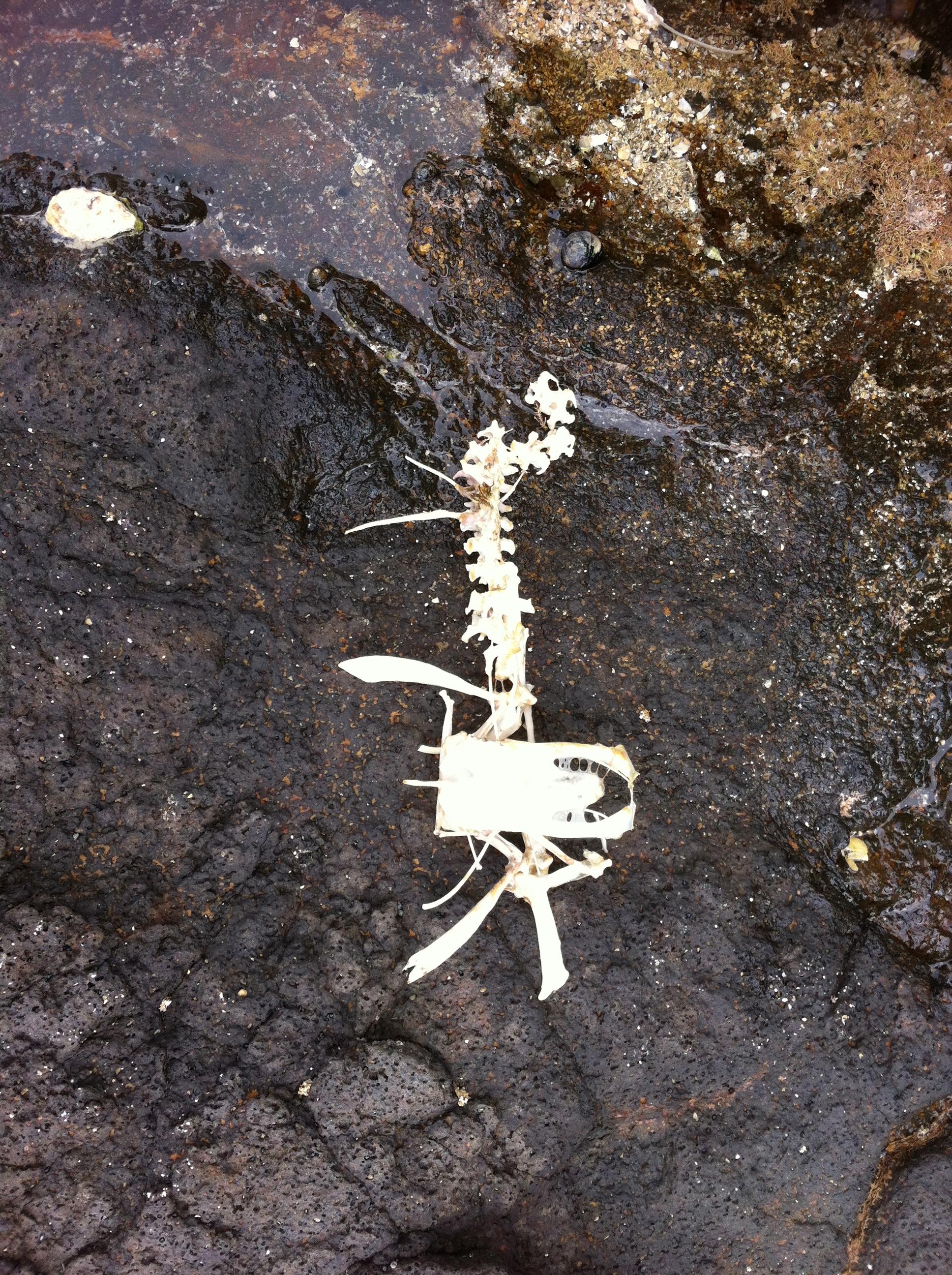 unidentified skeleton