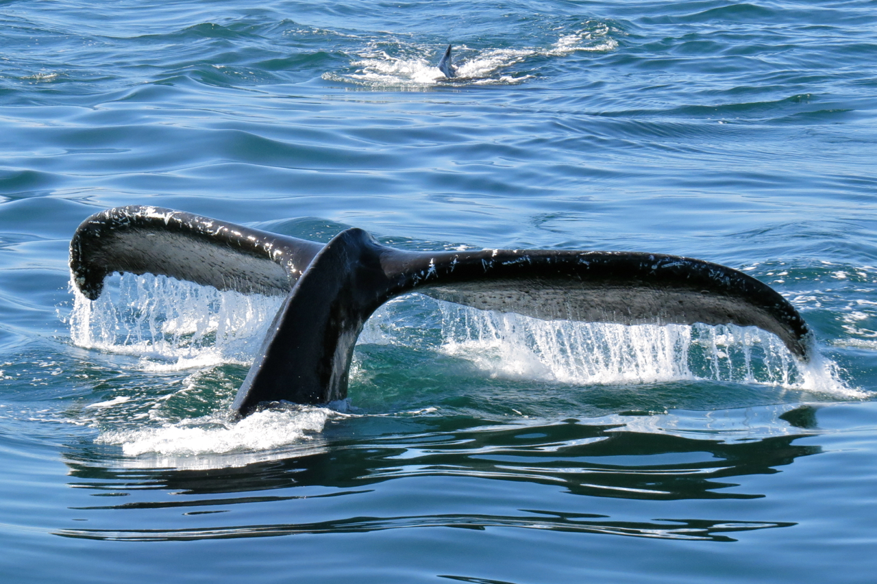 whales1