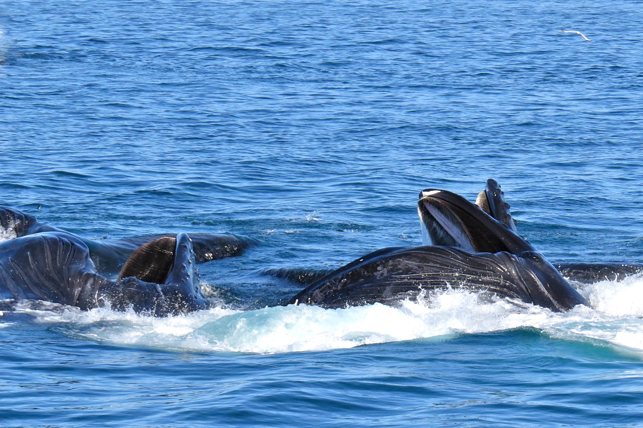 whales2
