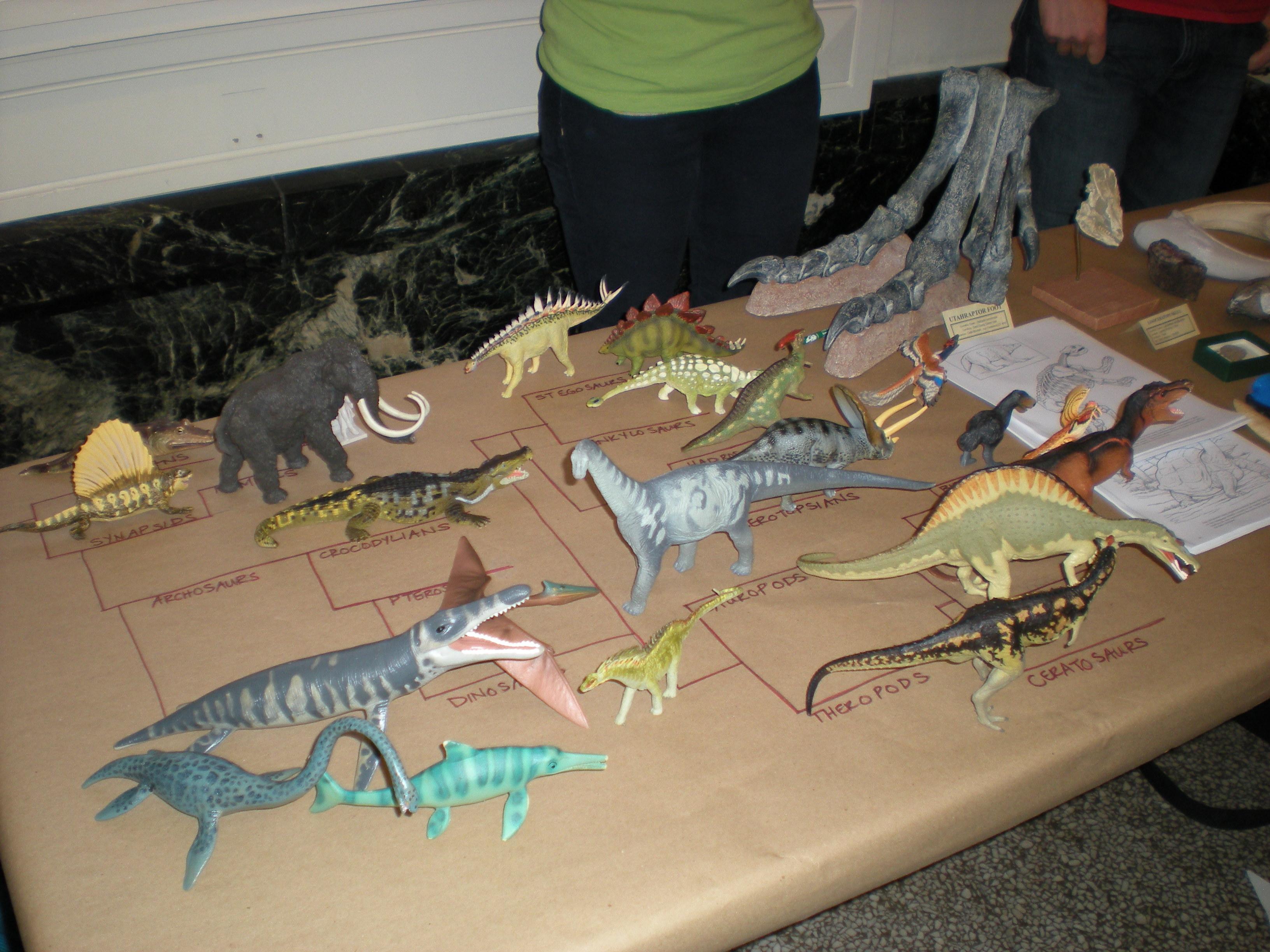 The pyhlogeny of plastic animals.