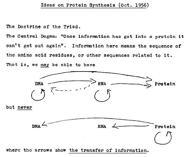 crick_original_dogma_1956