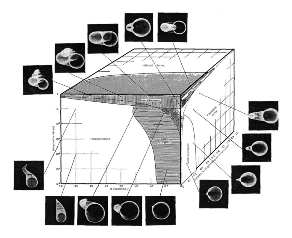 Raup's (1966) morphological space-- the