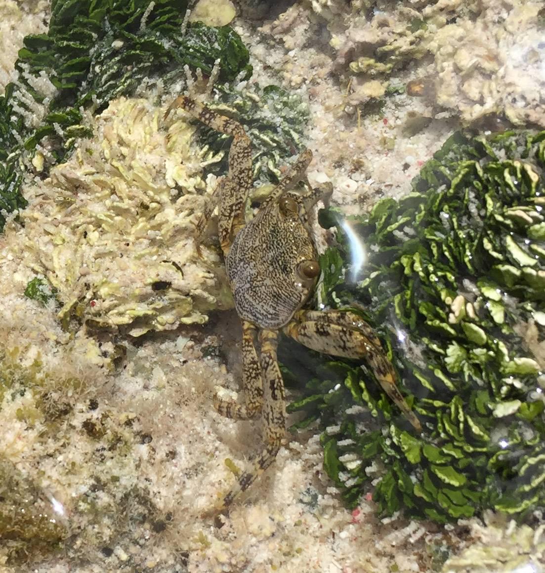 015-img_4116-crab-in-tide-pool