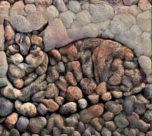 stone-cat