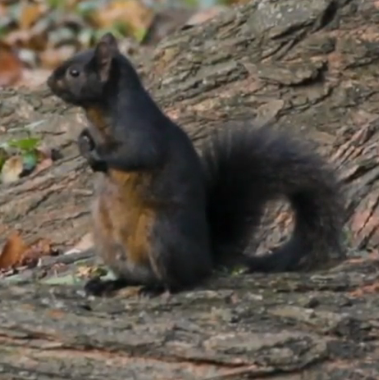 Screenshot_2020-01-09 There are 2,373 squirrels in Central Park I know because I helped count them .png
