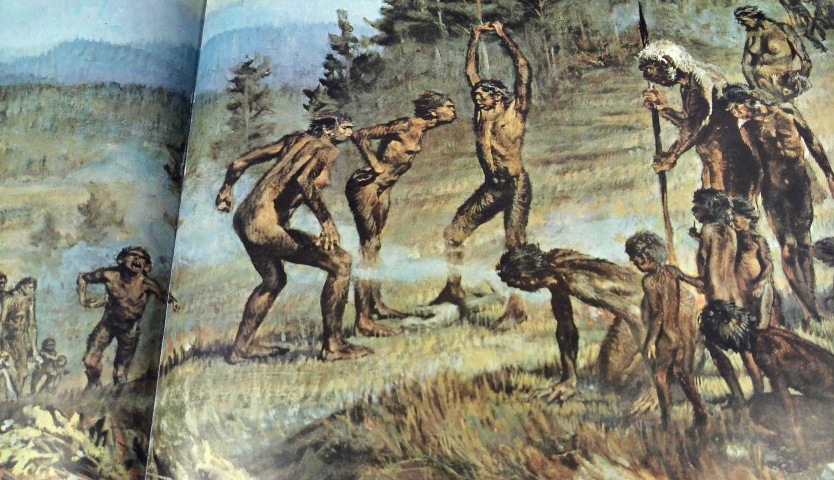 Homo erectus, fide F.C. Howell (1968).